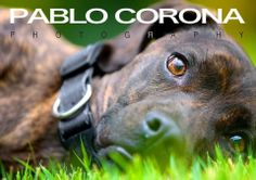 I'm Ready For My Closeup #dogs @Pablo Corona Photography