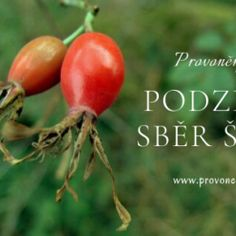 Pampelišková mast Homemade, Vegetables, Den, Beauty, Syrup, Home Made, Vegetable Recipes, Beauty Illustration, Hand Made