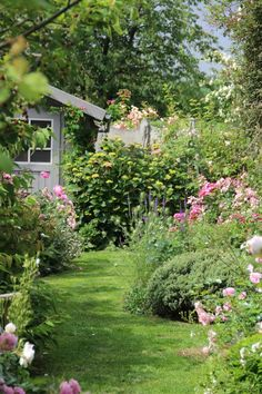 Winding grass path leading through herbaceous borders to the garden shed