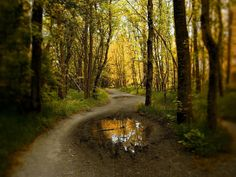 My ideal forest hike. Perfect color temp, tone, and lighting. Very wooded surroundings.