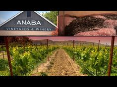 Anaba Wines - About Us - Videos   To learn more about Beau Wine Tours and the services we offer in #NapaValley & #Sonoma click here: https://www.beauwinetours.com/