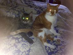 Halloween cats, Basil and Finnegan, fire up in readiness. No zombie shall be safe tonight.
