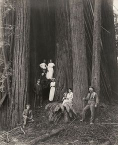 The year 1920: A group of men, women, and children pose in front of giant redwoods in California.  Flashback 128 years into photographic history as we bring you images from the NatGeo archives. See more at natgeofound.tumblr.com. @natgeocreative #tbt  Photo by Charles Willis Ward