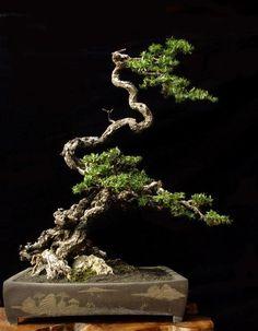 ᴥ֍A little #bonsai inspiration for today!☼♦ #BonsaiInspiration