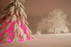 Add colored lighting under your tree's and when the snow falls they look like…