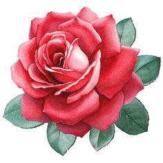 Send Roses Rose Stickers for iMessage - Veritas Design Group Black Rose Flower, Beautiful Rose Flowers, Amazing Flowers, Send Roses, Geometric Symbols, Flower Clipart, Botanical Flowers, Arte Floral, Rose Design