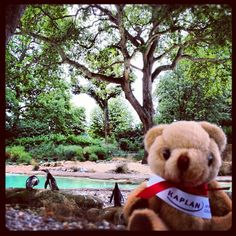 The #kaplanbear was at the #londonzoo, taking part in a #english #study #world #event. He absolutely loved the #penguins! Did you know that the #London #Zoo is just 30minutes away from Kaplan International College London? #kicl #kiclondon by KIC Pathways - University Preparation Courses, via Flickr