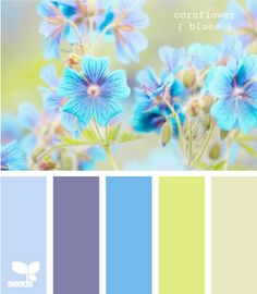color combinations. If I ever have a little girl, this will be her room.
