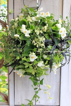 Container Plants, Container Gardening, Floating Garden, Moon Garden, Foliage Plants, Arte Floral, Hanging Baskets, Green Flowers, Flower Pots
