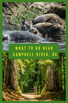 10 Things to do Within 1 Hour of Campbell River, BC Visit Canada, Canada Eh, Oh The Places You'll Go, Places To Visit, West Coast Canada, Canadian Travel, Camping Stuff, Diy Camping, Vancouver Island