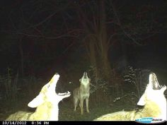 A friend is an avid deer hunter. His trail camera recently got this cool shot.
