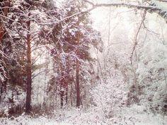 Сегодня в лесу было волшебно