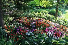 'Limited Edition' mix of accent impatiens