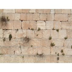 Ha Kotel ❤ liked on Polyvore featuring backgrounds