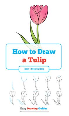 Learn How to Draw Tulip: Easy Step-by-Step Drawing Tutorial for Kids and Beginners. #Tulip #drawingtutorial #easydrawing See the full tutorial at https://easydrawingguides.com/how-to-draw-a-tulip-really-easy-drawing-tutorial/.