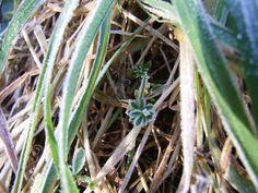 frostbitten grass