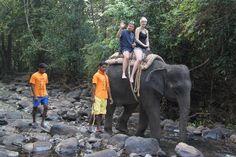 Calangute Tourism Best of Calangute, India - Tripadvisor Site Photo, Goa, Elephants, Trip Advisor, Tourism, India, Nature, Animals, Turismo