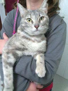CHISPITAS - Gato adoptado - Asoka el Grande