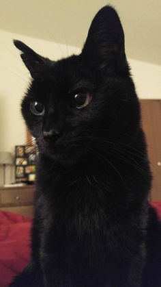 We don't know how old he is for sure, but we've had him for 13 years. Meet Mike! - credit to: swipurr.com