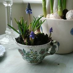 Lovely little flower in a vintage cup!