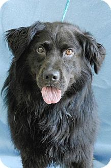 8/28/16 Do you have room in your heart for me???? Retriever (Unknown Type) Dog for adoption in Johnson City, Tennessee - jericho/bear