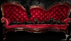 Black Kittens on a Victorian Couch Check us out on Fb- Unique Intuitions Victorian Couch, Victorian Furniture, Unique Furniture, Victorian Gothic, Victorian Life, Victorian Decor, Victorian Houses, Gothic Art, House Furniture