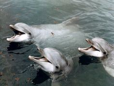 Setubal , Dolphins at Portugal Dream Coast http://portugaldreamcoast.com/wild-dolphins-gallery-of-photos/#