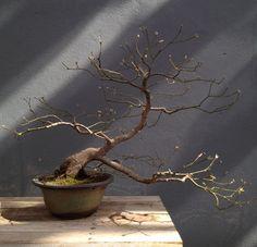 Bonsai Garden Yard Ideas, Indoor Garden, Garden Plants, Dwarf Trees, Terrarium Plants, Wild Ones, Wabi Sabi, Ikebana, Wonderful Things