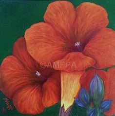 Orange Trumpets 12 x 12 oil painting on canvas