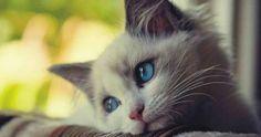 Cómo saber si tu gato está pasando por un cuadro depresivo: ¡Busca los signos!