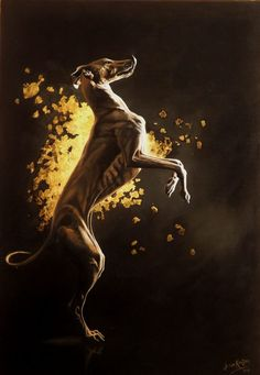 """Title:""""Golden Girl"""" Artist: Jo van Kampen Medium: Oils on canvas with gold leaf Price: $1,600 Painting Details:My whippet Ollie inspired this painting. The sheer athleticism, power and perfection combined with the delicacy and sweetness, and gentleness of a sighthound. Then there was the glittery glamour which they seem to posess indicated by the gold leaf behind. Also it has to be said, the counter surfing abilities and inherent greed, and my model here is quite obviously wanting a…"""
