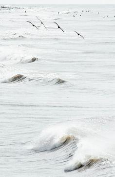 Birds over the sea | beach, ocean & sea . Strand & Meer . plages & mer | Photo @ Tumblr |