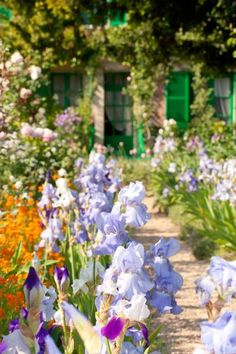 Irises in Monet's Garden, Giverny, uncredited