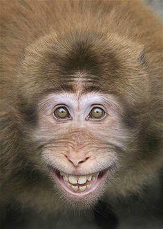 Imagem: 'Sorridentes', eles surpreendem os fotógrafos (© Hu Hongkun/Caters News) Macaco Chinês