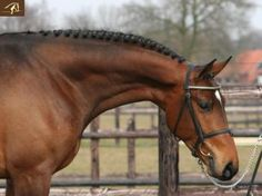 Washington warmblood for sale. Click for a large image