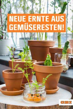 Herb Garden, Vegetable Garden, Garden Plants, Plants Are Friends, Green Life, Garden Landscaping, Life Hacks, Eco Friendly, Planter Pots
