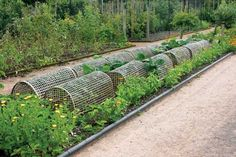 You'll have your best garden ever if you create permanent garden beds— whether they're raised beds, at ground level, framed or unframed.data-pin-do=