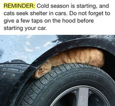 Reminder watch out for cats hiding. Give a few taps on the hood before starting your car.