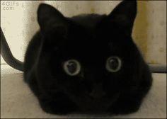【画像あり】俺の猫gifフォルダが火を噴く!