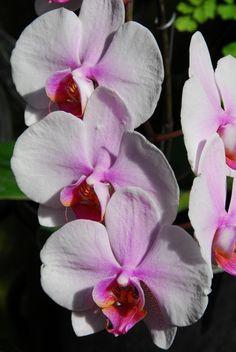 Flower, Longwood Gardens