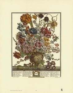 Twelve Months of Flowers, 1730, March Art Print by Robert Furber at Art.com