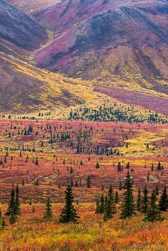 Autumn in Denali National Park, Alaska, USA