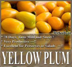 YELLOW PLUM TOMATO Tomato seed Heirloom by ALLooABOUTooSEEDS Tomato Tomato, Tomato Seeds, Yellow Plums, Yellow Tomatoes, Vegetable Garden, Salads, Mango, Gardening, Fruit