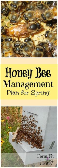 Get Ready for Spring | Honey Bee Management Plan | Spring Beekeeping Tips #beekeepingideas #beekeepingtips
