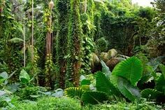 An indoor forest diy tree tutorial for small world play how to trees . Indoor tropical forest green nature x chainimage jungle trees hd wallpaper . Golden gaits garden indoor forest heres a couple of photos our growing in their maxi. Rainforest Pictures, Jungle Pictures, Nature Pictures, Beautiful Pictures, Forest Wallpaper, Tree Wallpaper, Nature Wallpaper, Tropical Landscaping, Landscaping With Rocks