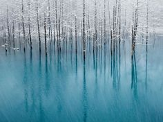 """""""The Blue Pond"""" & by Kent Shiraishi; (Biei, Hokkaido, Japan) Honorable Mention for National Geographic 2011 Photo Contest. Beautiful World, Beautiful Places, Beautiful Pictures, Amazing Places, Trees Beautiful, Amazing Things, Beautiful Landscapes, Photoshop, National Geographic Photo Contest"""