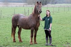 His mane is tinged with grey and he'd have trouble clearing a fence.  But that's hardly surprising because at 51, Shayne could be the oldest horse in the world.  The chestnut stallion has lived at the Remus Memorial Horse Sanctuary in Brentwood, Essex, since 2007.