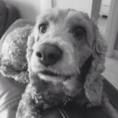 Daisy<3