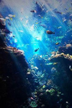 inside the ocean