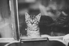 kitten   Flickr - Photo Sharing!